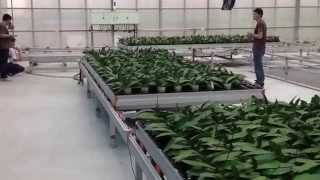 Greenhouse Rolling Bench