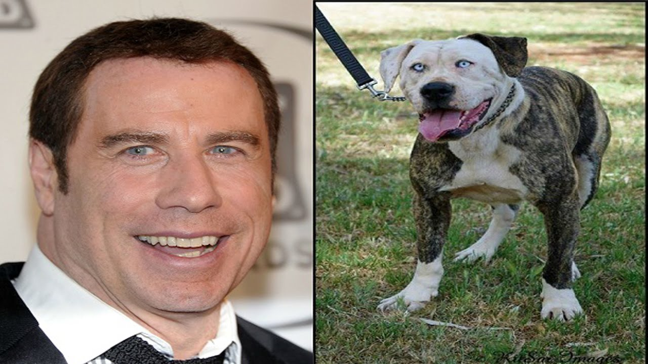 Celebrities Who Look Like Their Dogs | www.imgkid.com ...