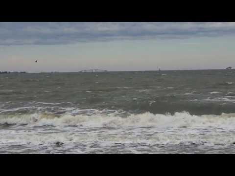 Gulf Shores Red Tide Or Random Fish Kill