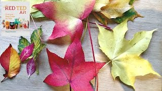 How to Preserve Leaves (comparing Glycerin Bath to other methods)