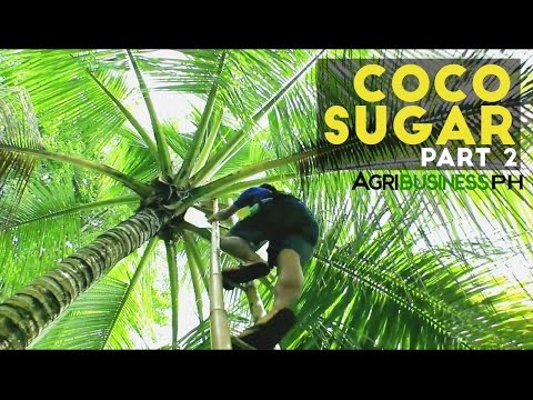 Coco Sugar Part 2 : How to make Coco Sugar | Agribusiness Philippines