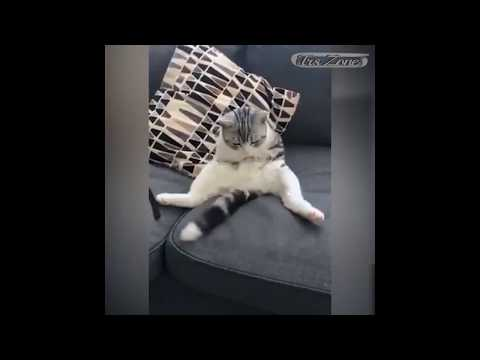 When Cats Are Bored They Can Do Crazy Things