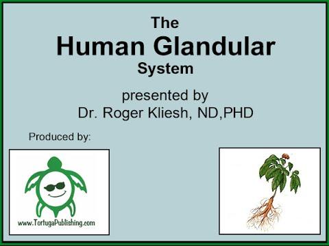 The Human Glandular System