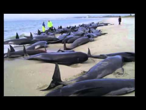 PSA Marine Ecology