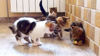 Let's play football with Kittens !