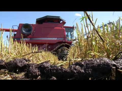 AgweekTV: Wild rice tradition