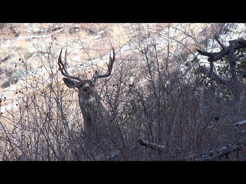 River Of No Return- [4K] Mule Deer Idaho Wilderness Adventure Hunt