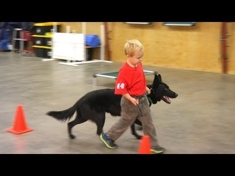 Kids & Protection Dogs 'Classified' Home Raised Personal Protection Dog For Sale
