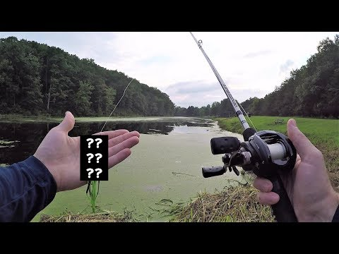 BEST Topwater Bass Lure You've Never Heard Of
