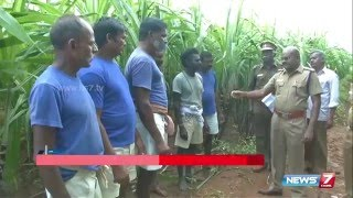 Prisoners at Trichy central prison cultivates sugarcane & turmeric ahead of Pongal | News7 Tamil