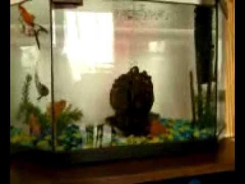 comment nettoyer la vitre int rieur de son aquarium youtube. Black Bedroom Furniture Sets. Home Design Ideas
