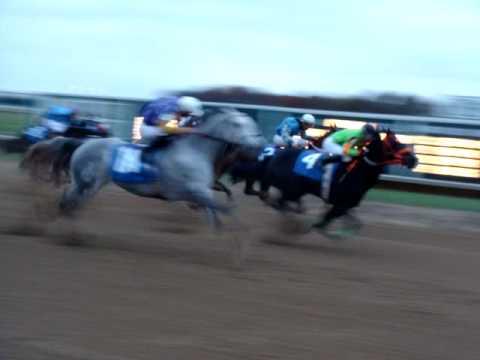 Quarter Horse Race 2