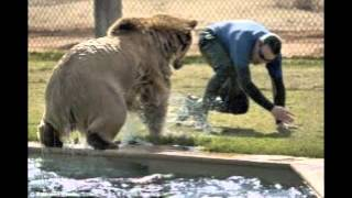 Man being attacked by bear at National Zoo New York
