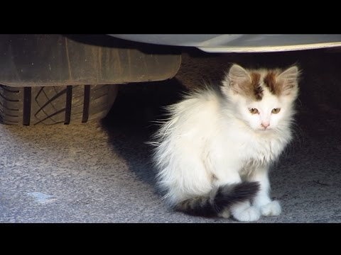 Kitten under the car and family cats very hungry