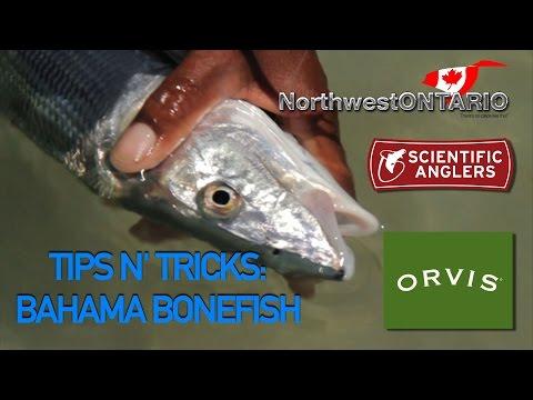 TIPS N TRICKS Bahama Bonefish