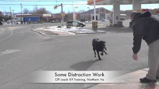 Gsd/lab Mix Amazing Before/after Video! Dog Training In Northern Virginia