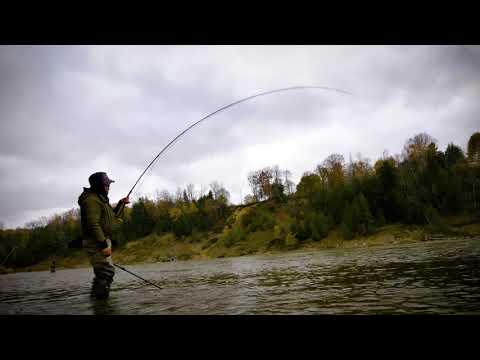 Steelhead Catch From Saugeen River