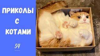 Смешные КОТЫ КОТИКИ КОТЯТА Приколы с животными 54