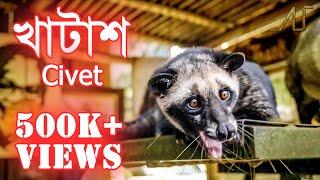 খাটাশ   গন্ধগোকুল   Civet   Another Update