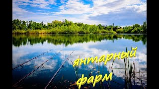 Озеро Янтарное фарм Карпа или нет РР4