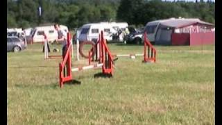 Cosmo Border Terrier Agility