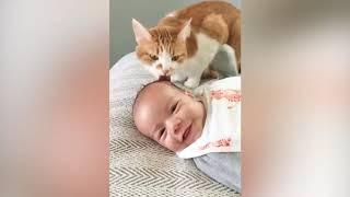 人間と猫の母性あふれる動画集です よければちゃんねるお願いいたします。