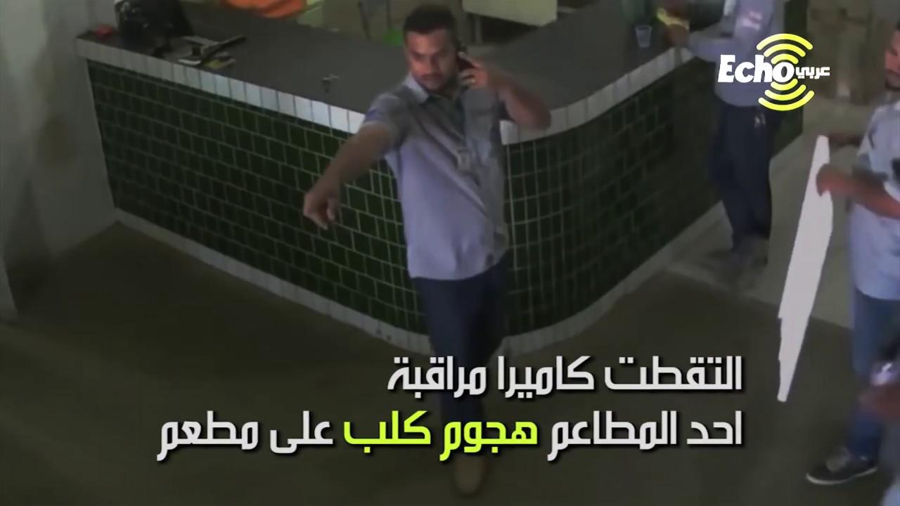 فيديو مضحك لهروب عمّال مطعم من كلب هجم عليهم!