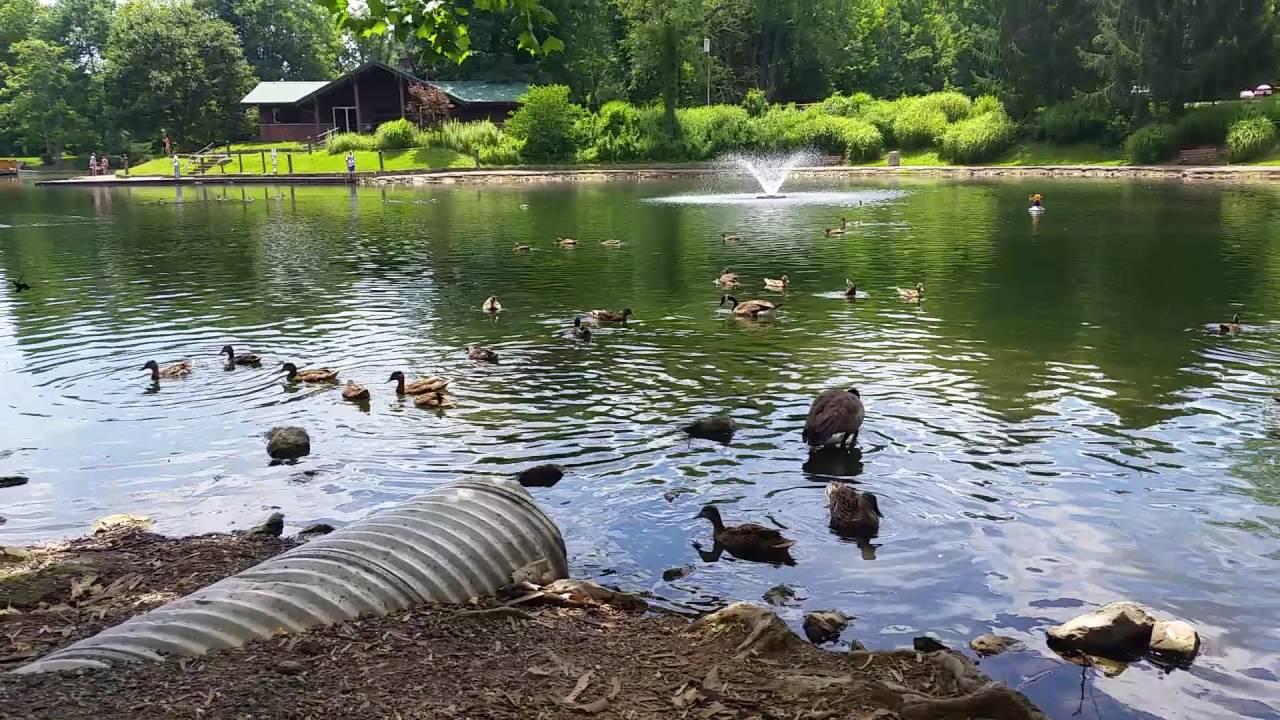 Coonskin park