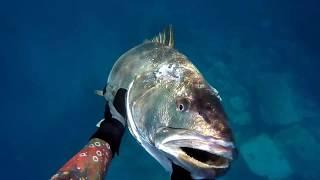 Pesca Submarina en Canarias corvina 31.5kg .Team Ckv&Ffsub