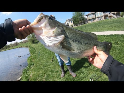 Biggest Bass Of The Year! (Swimbait Fishing)
