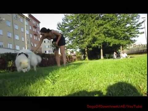 A Girl & Her Dog Sit (part 3) Halloween Pumpkins 18+ -(فتاة والكلب يجلس ) from YouTube · Duration:  44 seconds