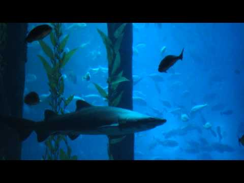 Аквариум в Дубай Молле  - Aquarium in Dubai Mall 2013 Arab Emirates