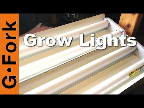 Best fluorescent lights for growing plants