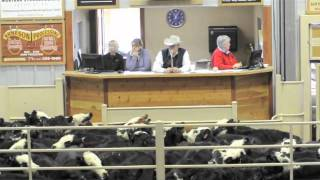 Montana Hereford Association Feeder Calf Sale