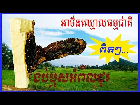 នប់ឬសអំពិលជូរ | វត្ថុសក្តិសិទ្ធិខ្មែរ [ជុំនឿខ្មែរ ] Khmer's Believed
