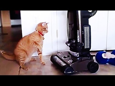 CATS AND VACUUM CLEANER   part 2