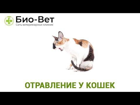 Отравление у Кошек ��// Симптомы и Лечение // Сеть Ветклиник БИО-ВЕТ