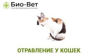 Отравление у кошек. Ветеринарная клиника Био-Вет.
