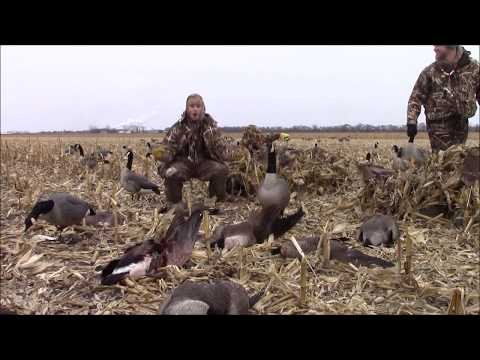 Minnesota December Goose Hunt - 39 Bird Limit!