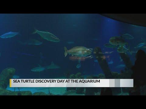 Aquarium Hosts Sea Turtle Event For Whole Family