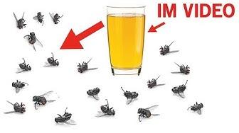 Diese Hausmittel helfen gegen Mücken, Fliegen und sogar Kakerlaken!