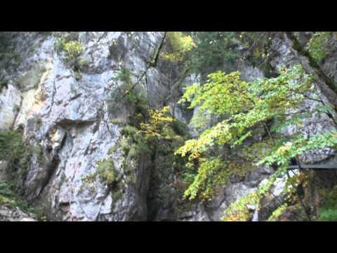 Beautiful German woods and waterfalls