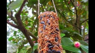 Reusing Toilet Tubes For Diy Bird Feeder