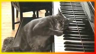 Смешное про кошек. Позитив.Создай себе хорошее настроение