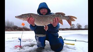 ЩУКА НЕ ЛЕЗЕТ В ЛУНКУ РЫБАЛКА НА ЖЕРЛИЦЫ 2020 Рыбалка в Рязанской области