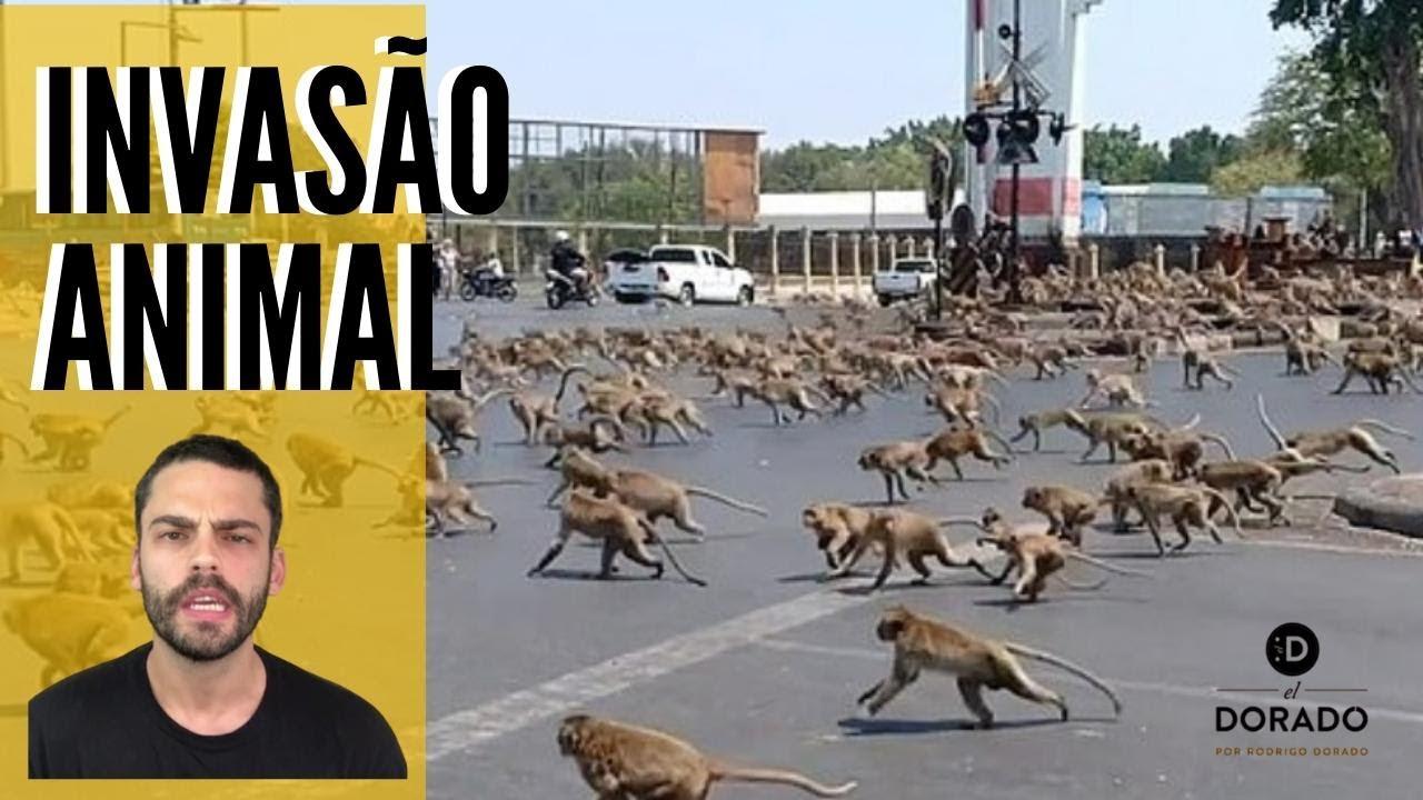 Invasão Animal!