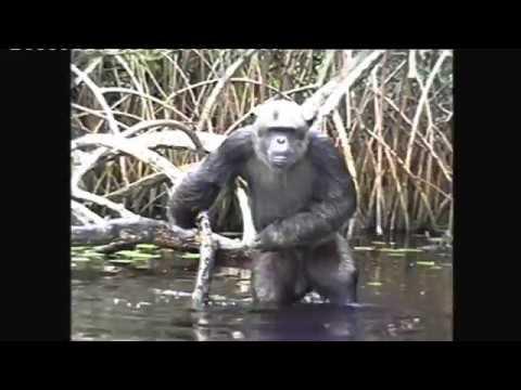 Nöel à Conkouati avec HELP Congo (2005 )