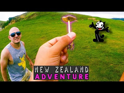 The Lord Of The Mushrooms: Return Of PsychedSubstance (New Zealand VLOG)
