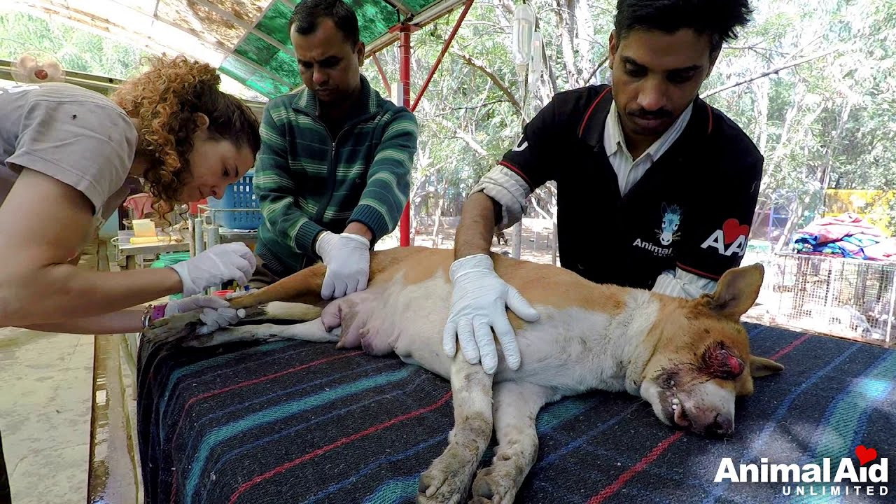 Download After losing her eye, unable to walk, sweet mother recovers and sees her puppies again.