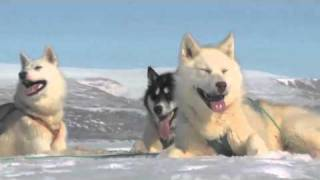 Human Planet | Arctic: Greenland Sled Dogs | Premieres Sunday, 20 March, Abc1